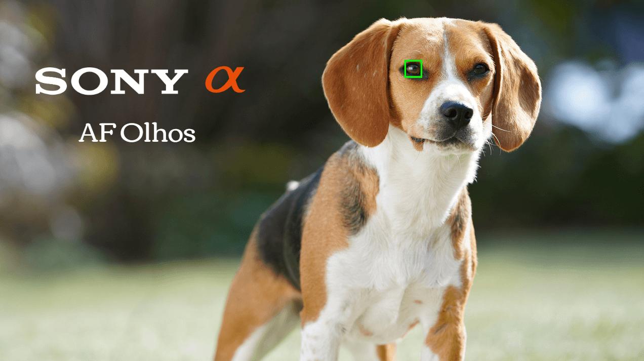 Sony AF Olhos: O Segredo para Retratos Perfeitos.