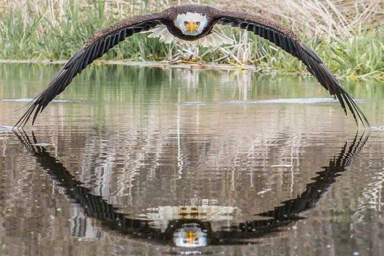 veja-a-fotografia-espetacular-de-uma-aguia-que-ganhou-o-mundo-Blog-eMania